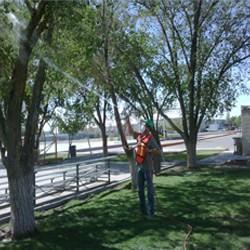 Fumigaciones Profesionales Tarahumara | Servicio garantizado